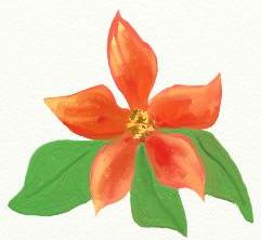 poinsettia-flower-for-boxes-ed.jpg