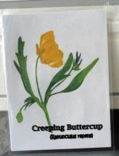 Buttercup ATC 1