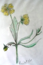 Buttercup sketch